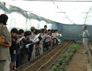 杉並区内小学校の畑見学